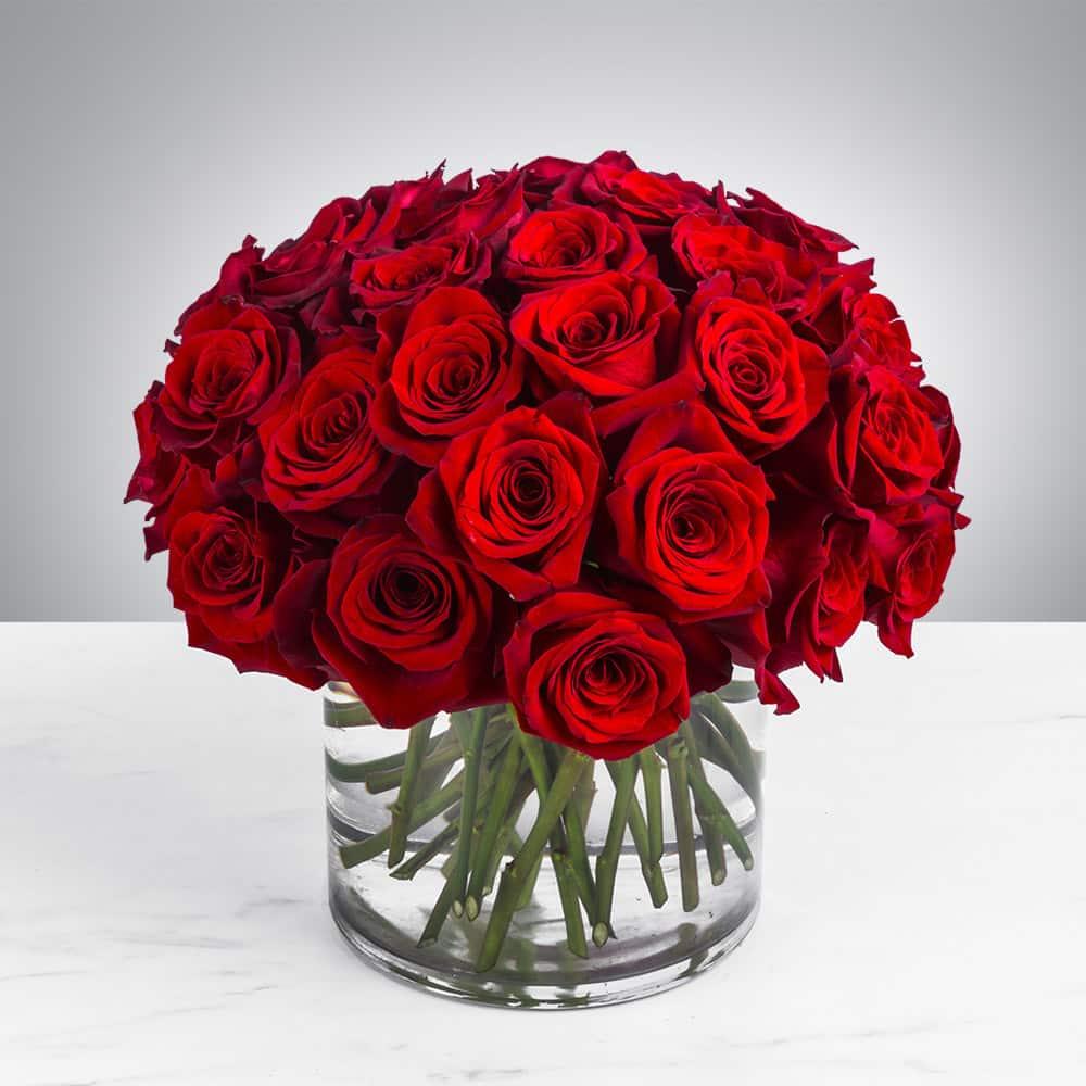 گل رز قرمز ،خرید و سفارش آنلاین گل رز قرمز ارزان قیمت