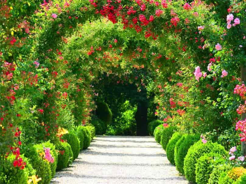 خرید گل رز اینترنتی، قیمت گل رز و سفارش گل رز ارزان