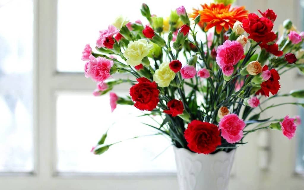 گل میخک، فروش گل میخک، قیمت دسته گل میخک ارزان