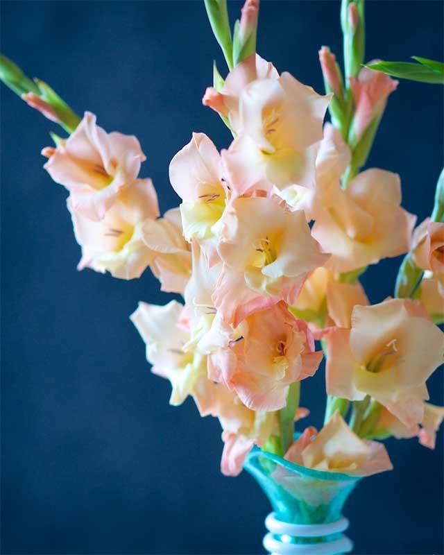 قیمت گل گلایول، فروش اینترنتی دسته گل گلایول ارزان قیمت