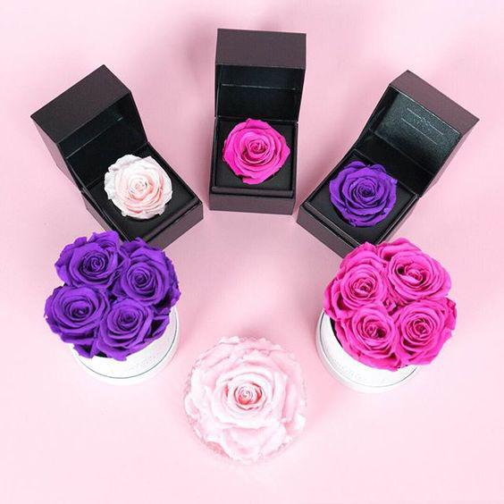 سفارش آنلاین گل رز جاودان طبیعی، فروش اینترنتی گل رز ماندگار و رز عشق ابدی