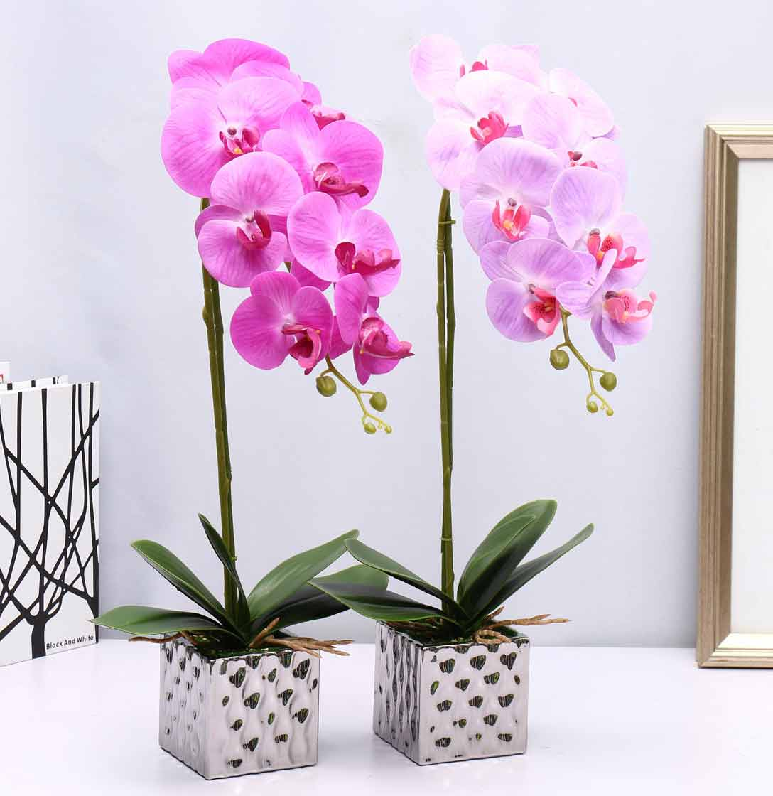 انواع گل ارکیده گلدانی، سفارش اینترنتی گل ارکیده گلدانی فالانوپسیس ارزان قیمت