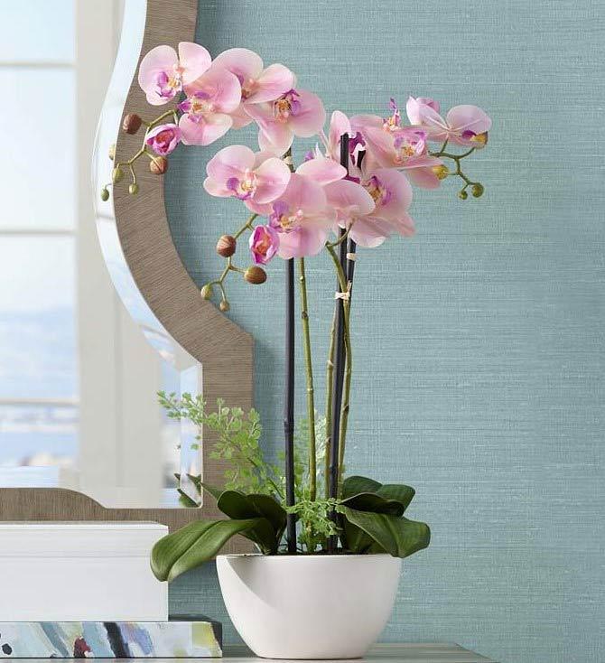 فروش اینترنتی گل ارکیده فالانوپسیس صورتی با گلدان، قیمت گلدان ارکیده زیبا