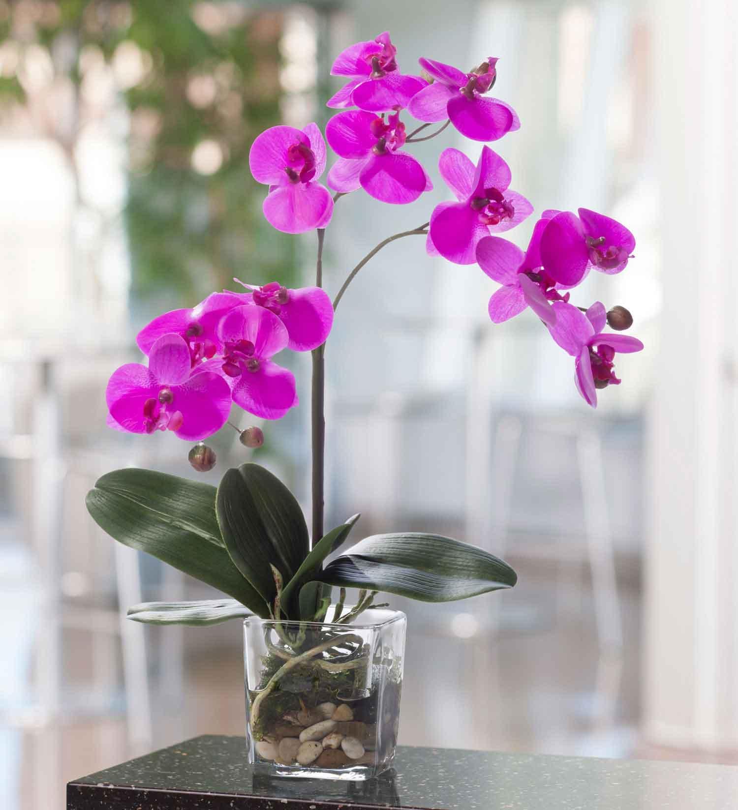 قیمت گل ارکیده گلدانی بنفش رنگ، خرید اینترنتی گل ارکیده گلدانی لوکس با گلدان