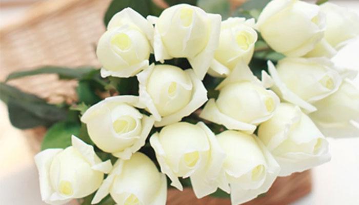 گل رز سفید نشانه چیست؟